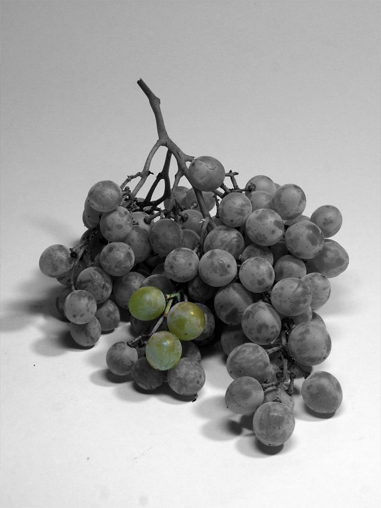 Uva bianca da tavola AgriDen